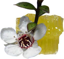 witch hazel for spider veins reviews